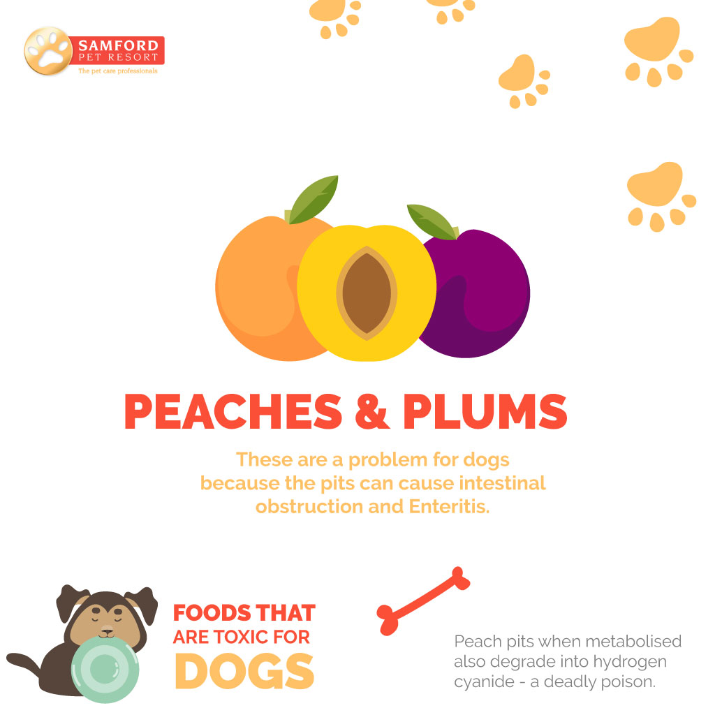 Can Dogs Have Red Plums
