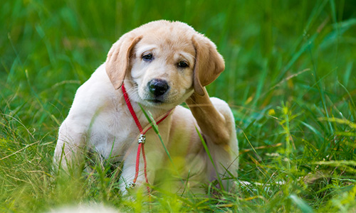 Common Signs Your Dog is Suffering from Spring Allergies