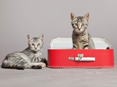 How to Prepare Your Cat for Their First Pet Resort Vacay