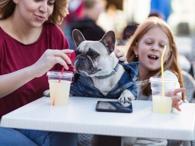 Our Favourite Pet-friendly Cafes in Brisbane