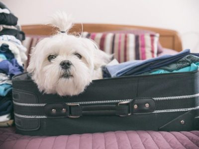 Things to consider when booking your dog into a pet resort