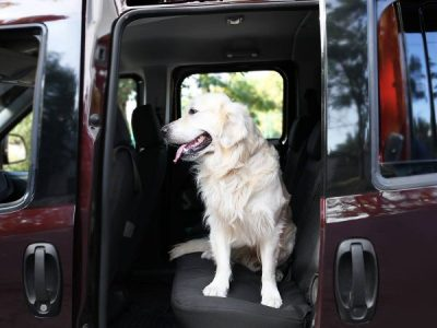 Pet resort pick-up and drop-off services
