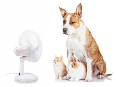 How to Keep Your Pet Cool in Summertime