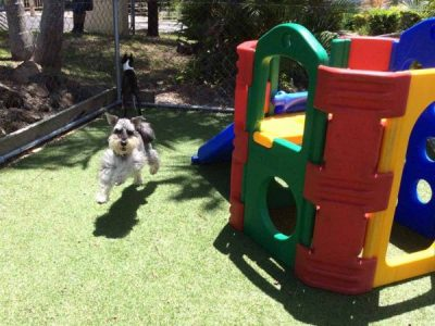 Room to Play: How Much Space Does Your Dog Really Need?