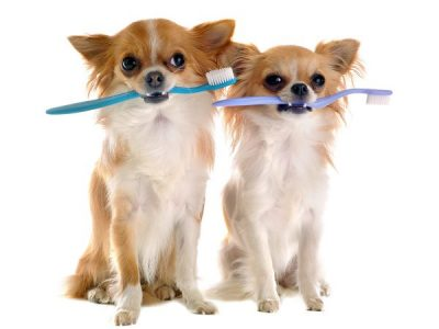 Tips for curing your dog's bad breath