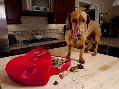 7 Foods That Are Toxic for Dogs