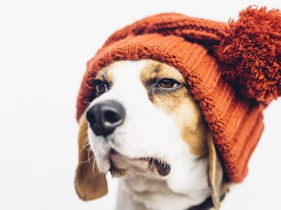 Caring For Your Pet in Winter