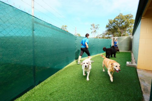 SPR-Dog-Accommodation-Gallery-6