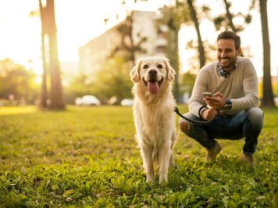 Why Samford is one of the best suburbs for dog owners