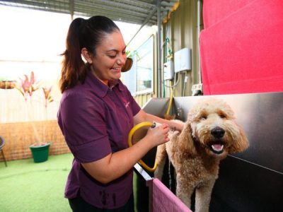 Spoil your pet with the ultimate pamper package!