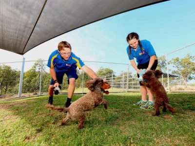 Bring your dog out for a playdate at Samford Pet Resort