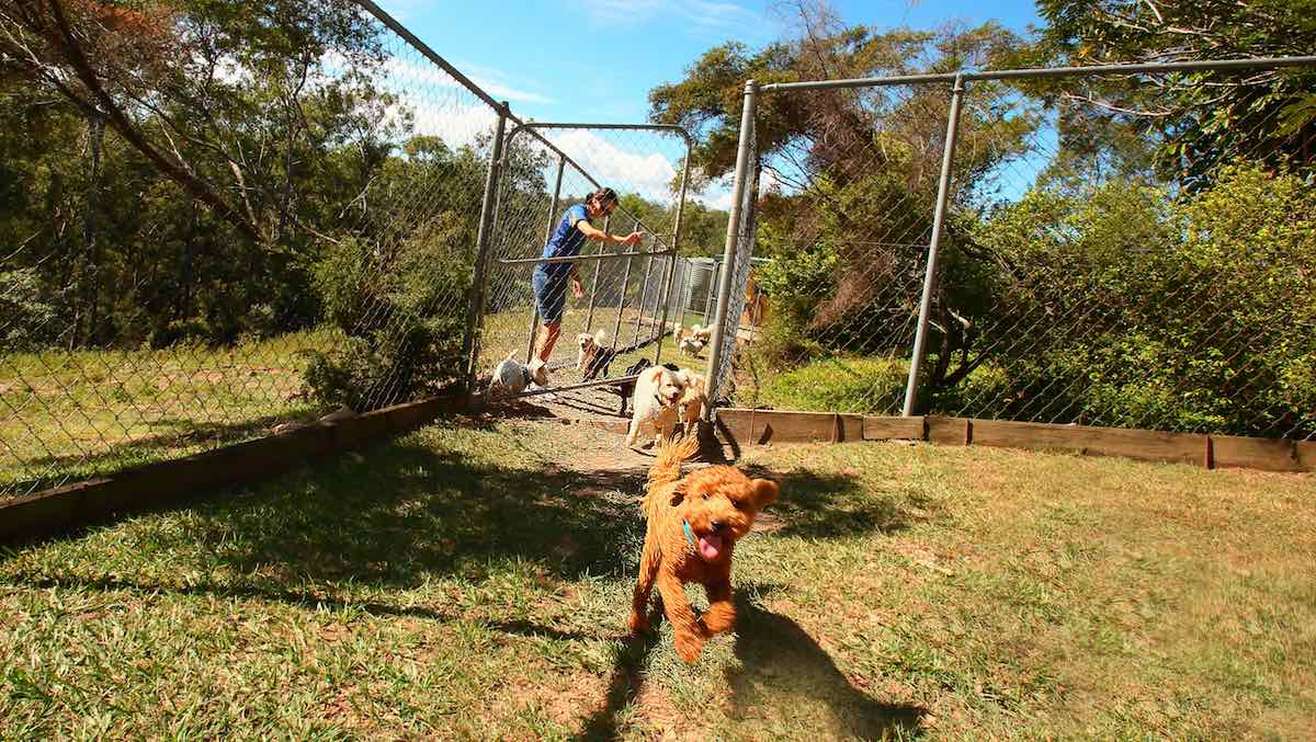 Is Your Yard The Right Size For Your Dog Samford Pet Resort