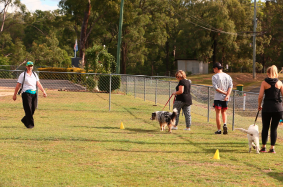 The Importance of Dog Training | Samford Pet Resort | 5 Star Pet Accomodation Brisbane