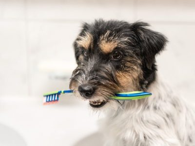 The Importance of Pet Oral Hygiene
