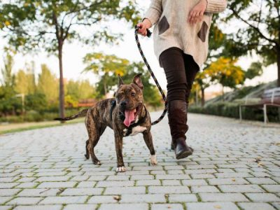 Things to look out for when walking your dog