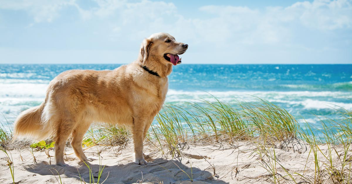 Samford Pet Resort Dog Friendly Beaches Brisbane