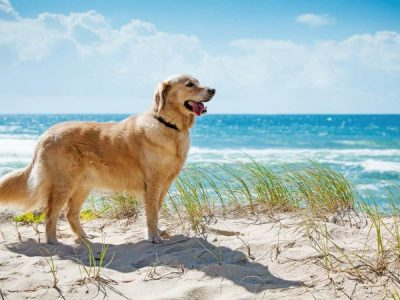 Dog friendly beaches around Brisbane