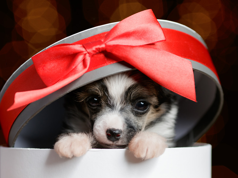 Buying Pets for Christmas