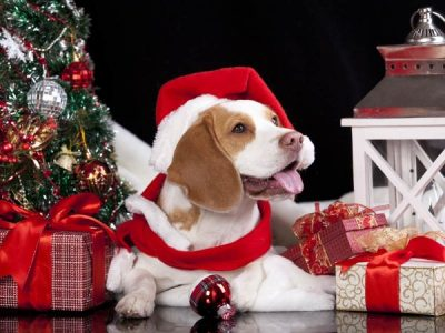 Our Top Five Christmas Presents for Dogs