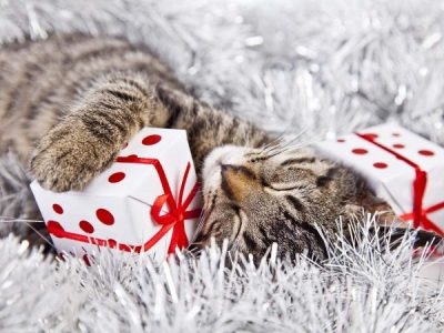 Our Top Five Christmas Presents for Cats