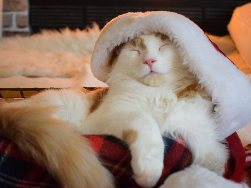 Helping Pets Stay Calm at Christmas