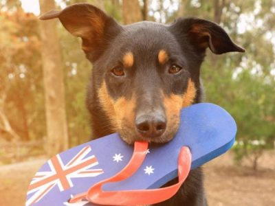 Dog Friendly Australia Day Activities