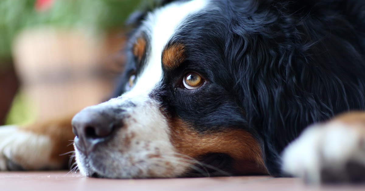 Is it safe to leave my pet with a pet sitter, pet minder or backyard boarder?