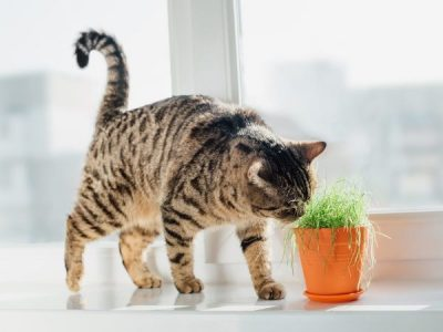 Which Indoor Plants Are Cat-Friendly?