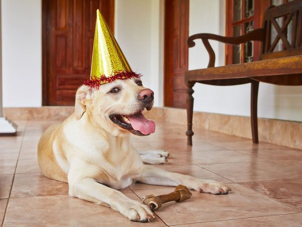 HOW TO HOST A PARTY WHEN YOU OWN A PET