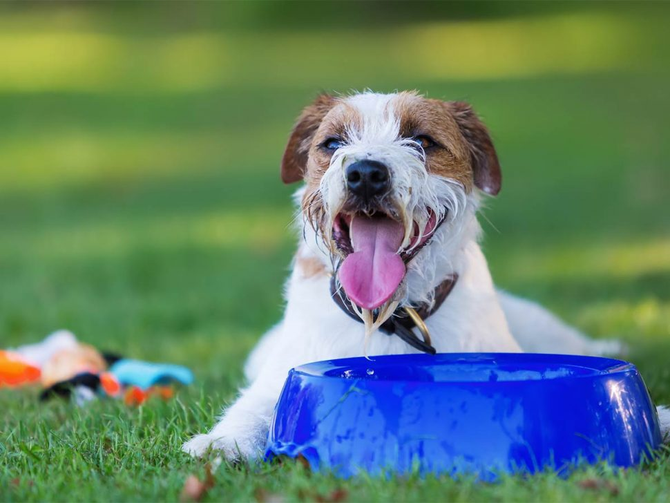 How Much Water Should My Dog Drink?