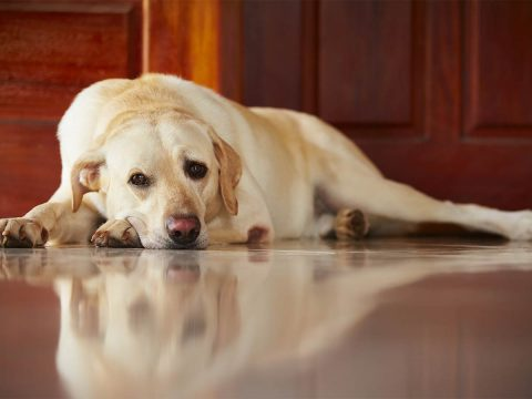 How to Alleviate Pet Separation Anxiety When You're on Holiday