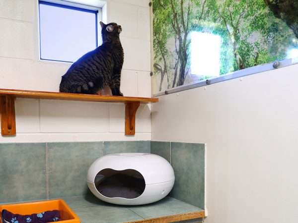 SPR Cat Accommodation Gallery