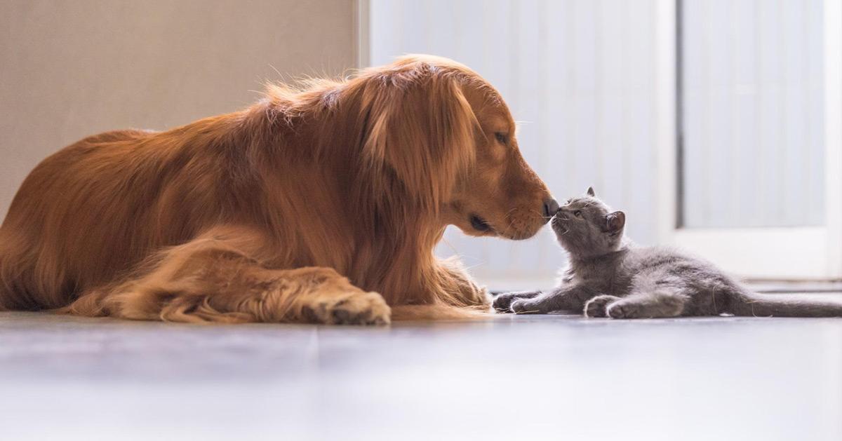 How to Introduce Your New Pet to Other Pets