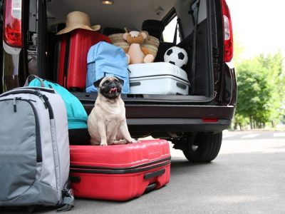 Tips to Reduce your Pets Stress when Travelling