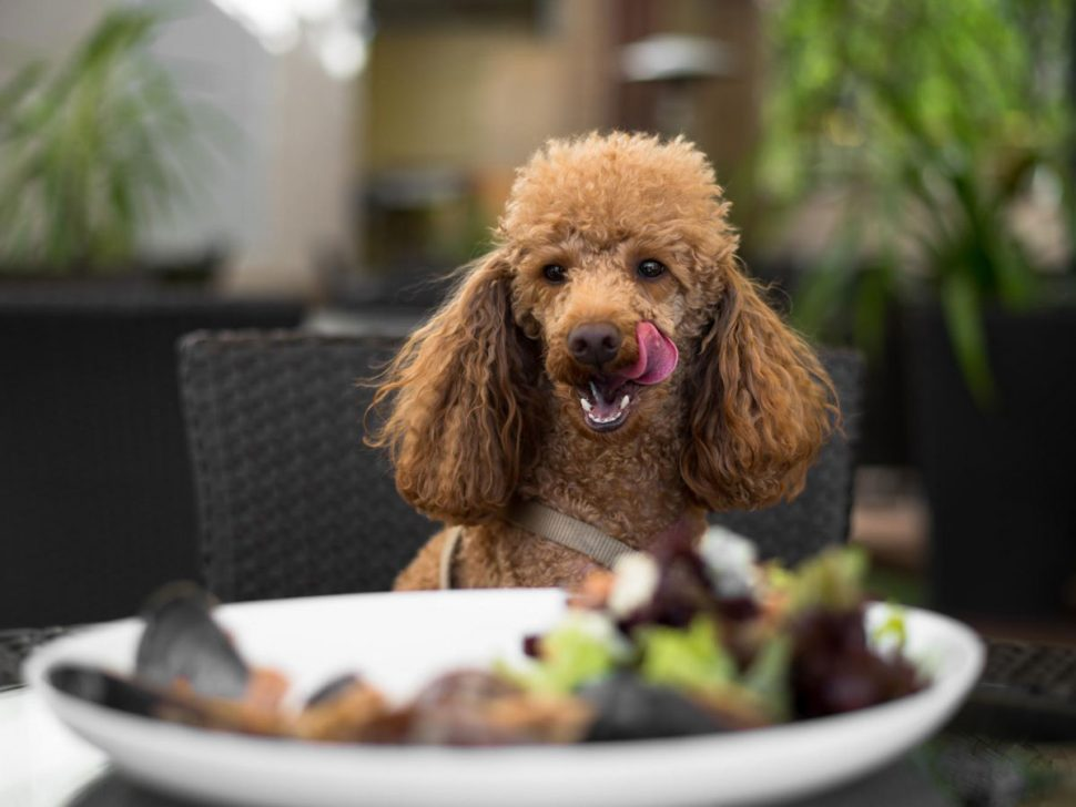Brisbane Dog-Friendly Cafes
