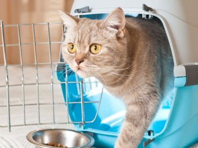 How to prepare your cat for boarding