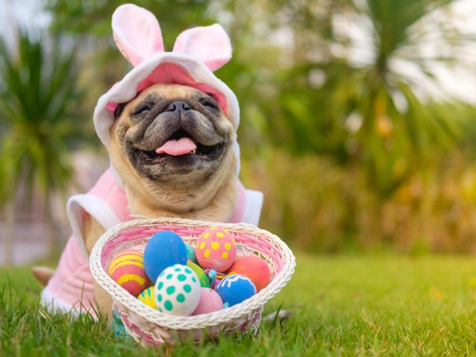 Samford Pet Resort can look after your pet over the Easter break. Book your dog or cat in for a stay at Samford Pet Resort while you are away over the Easter long weekend.