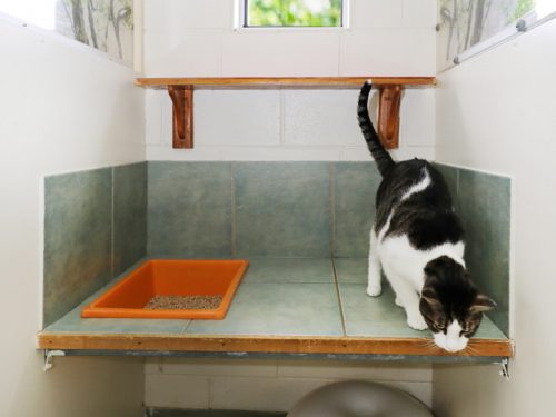 Samford Pet Resort Cat Accommodation Brisbane