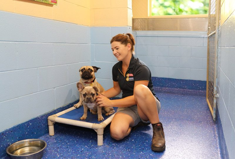 Samford Pet Resort Dog Accommodation Brisbane
