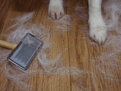 Tips to keep pet hair under control