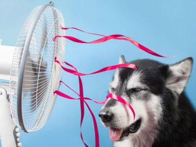 Top Tips for Keeping Your Pup Cool this Summer