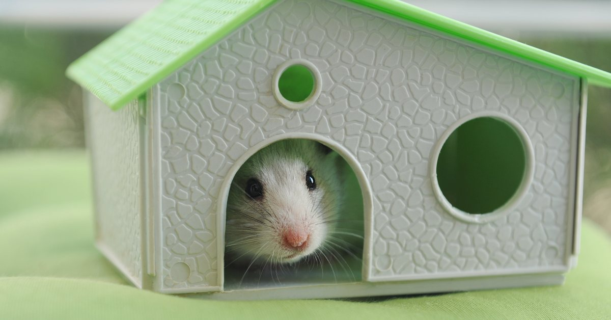 """alt""""=Hamster in small house"""""""
